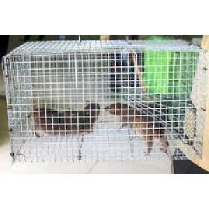 Pengendalian Hama Tikus
